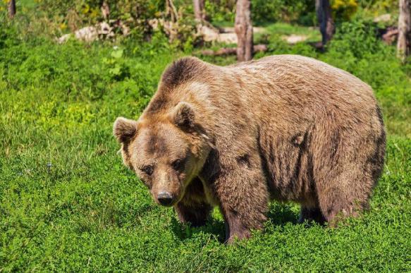30 медведей готов убить владелец зоопарка в Крыму