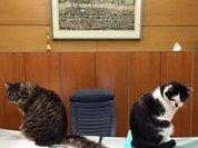 Мэр Риги: Напишу жалобу на думских котов, чтобы в Центре госязыка не скучали