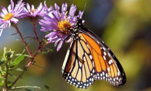 За последние 10 лет с лугов Германии исчезли 66% насекомых