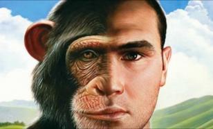 Человек-обезьяна: будущее Земли за химерами