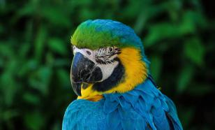 В Сочи закрыли нелегальный питомник с макаками и попугаями