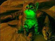 Светящиеся кошки против СПИДа