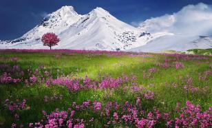 Китайские биологи открыли древнейшую в мире альпийскую экосистему