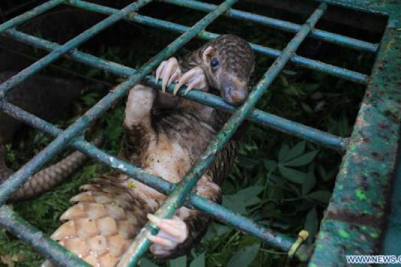 """В Китае законом запретили есть змей и других """"диких животных"""""""