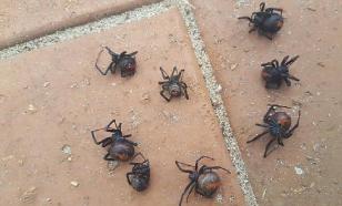 Жители Великобритании жалуются на нашествие пауков