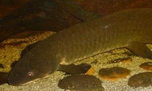 Исследование: конечности наземных животных развились из плавников