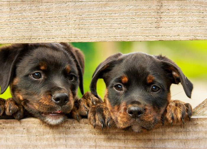 Кинолог назвал три условия, при которых можно разрешить выгул собак без фиксации