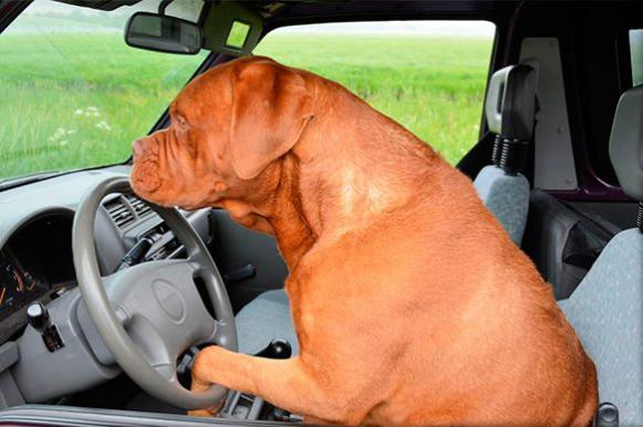 В США собаки-водители протаранили здание супермаркета. ВИДЕО