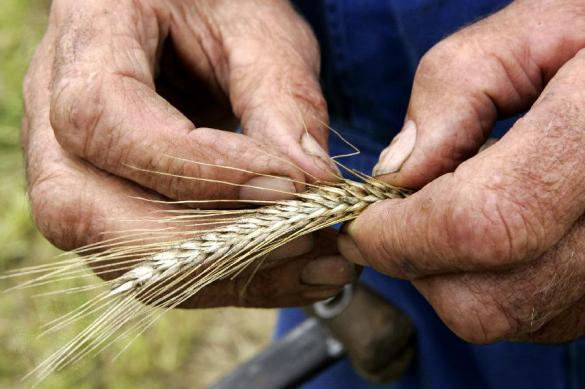 Российскому сельскому хозяйству предрекли гибель без мигрантов
