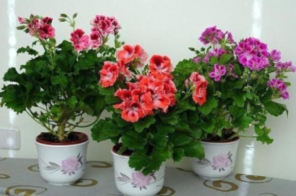 Эксперт рассказала об опасных и полезных растениях для дома