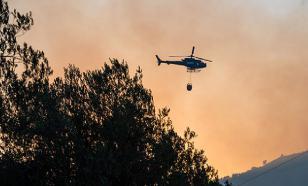 Эксперт: власти в регионах не готовы к борьбе с лесными пожарами