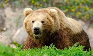 Полиция нашла садистов, издевавшихся над медведем на Курилах