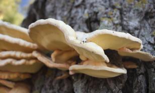 """Манцинелла, """"бешеные огурцы"""" и другие тайны мира флоры"""