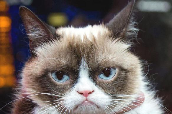 Медведев посочувствовал замерзающим на улицах котам