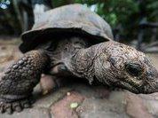 3D-челюсть подарила черепахе новую жизнь