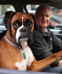 Как успокоить собаку в машине