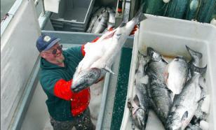 На Дальнем Востоке продолжается лососевая путина: уровень добычи достиг 187,7 тыс. тонн