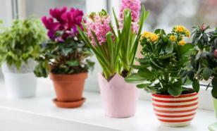 Уход за комнатными растениями: основные правила