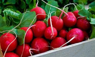 Все о редисе Сора: особенности сорта, практические рекомендации по выращиванию