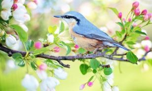 Орнитологи посчитали количество птиц на Земле