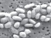 """В Калифорнии обнаружена """"инопланетная"""" бактерия"""