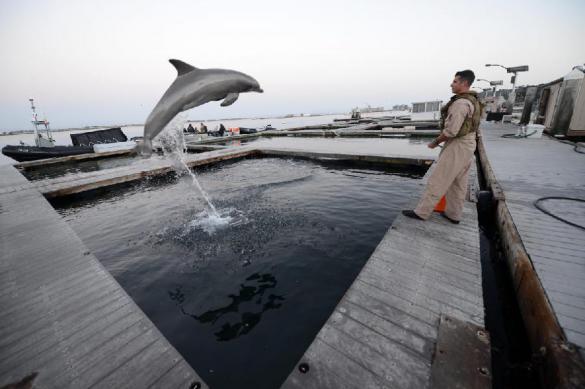 Есть ли в Иране секретные отряды дельфинов-убийц?