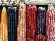 Так вырастут жабры от ГМО или нет?