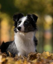 Какие болезни подстерегают собаку осенью