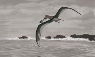 Палеонтологи раскрыли секрет аномально длинной шеи птерозавров
