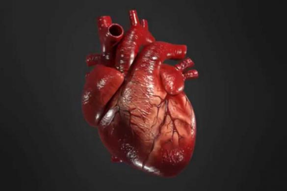Коронавирус может проникать в клетки сердца