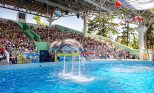 В сочинском дельфинарии белуха укусила ребенка за ногу