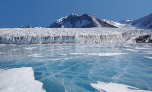 Под шельфовым ледником Антарктиды обнаружены странные существа