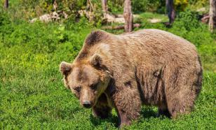 """Американский баскетболист УНИКС рассказал о """"медведях, пьющих водку"""""""
