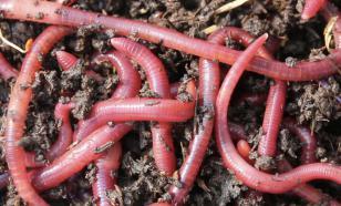 Первые паразиты появились на Земле более 500 млн лет назад