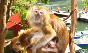 В Китае испанские учёные создадут гибрид человека и обезьяны