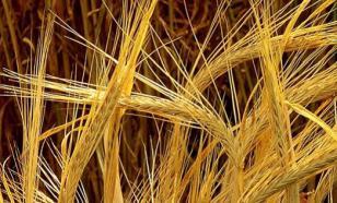 Подорожание зерна происходит ежегодно в этот сезон - источник