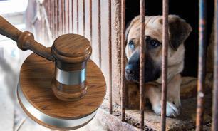 Юрист: Живодерок из Хабаровска надо изолировать от общества