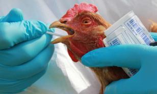 В Челябинской области произошла вспышка птичьего гриппа
