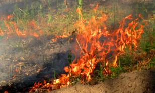 Эксперт рассказал, чем пал травы вреден для почвы