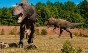 Динозавры переносили камни из Висконсина в Вайоминг в желудках