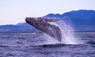 Обнаружены останки морского животного размером более 30 метров