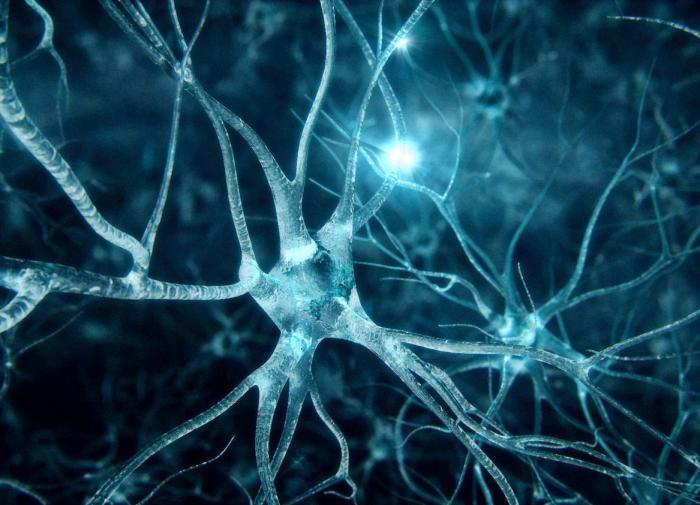 Российские учёные создали мини-мозг