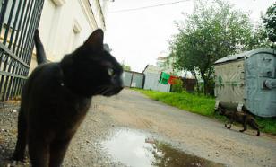 В Петербурге задержали мужчину, стрелявшего в кота