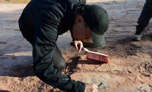 Китайские учёные обнаружили новый ареал обитания динозавров
