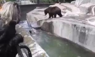 Мужчина напал на медведицу в Варшавском зоопарке