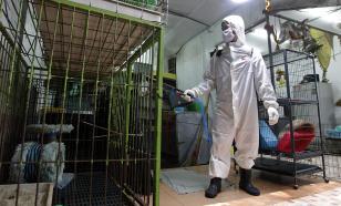 Пекин ушел на карантин: новая вспышка коронавируса разрастается