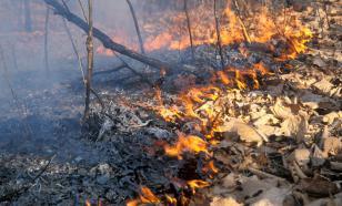 На юге России продолжают тушить крупный лесной пожар