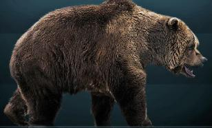 Пещерные медведи вымерли из-за большого носа