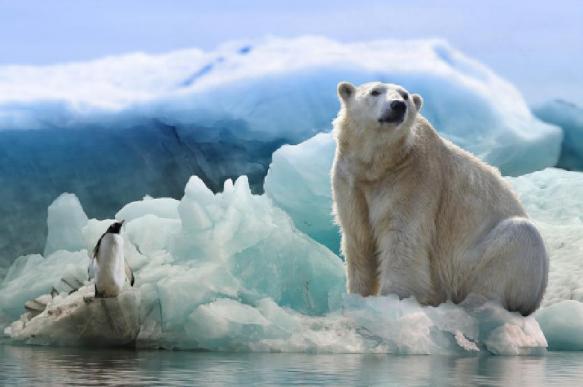 """Биологи пояснили, как в Арктике появился медведь с надписью """"Т-34"""""""