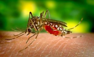 Эксперт рассказал о том, какие насекомые могут переносить коронавирус